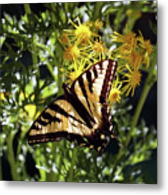 Butterfly At Wilson Creek #4 Metal Print by Ben Upham III