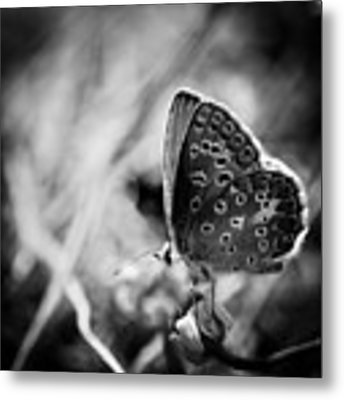Butterfly In Black And White Metal Print by Mirko Chessari