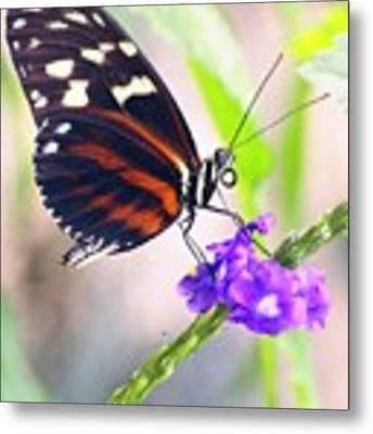 Butterfly Side Profile Metal Print by Garvin Hunter