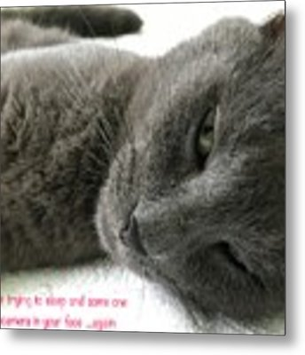 Resting Face Metal Print by Debbie Cundy