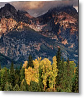 Cottonwoods Fir Trees Fall Color Grand Tetons Nat Metal Print by Dave Welling