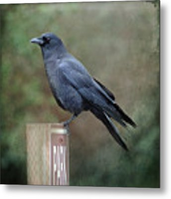 Crow Parking Metal Print by Sally Banfill