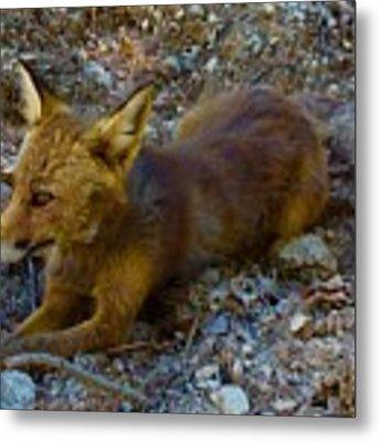 Cute Fox Friend  Metal Print by Colette V Hera Guggenheim