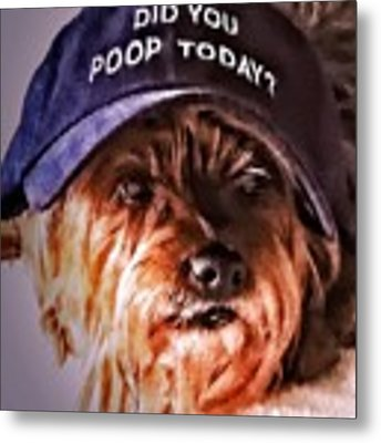 Did You Poop Today Metal Print by Kathy Tarochione