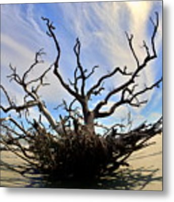 Driftwood And Roots Hunting Island Sc Metal Print by Lisa Wooten