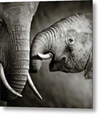 Elephant Affection Metal Print by Johan Swanepoel