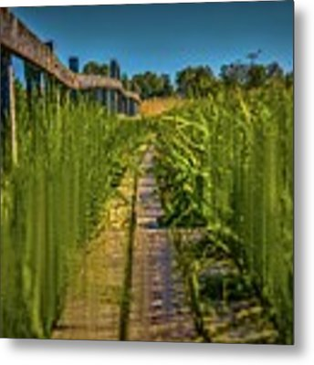Fairy's View #h5 Metal Print by Leif Sohlman