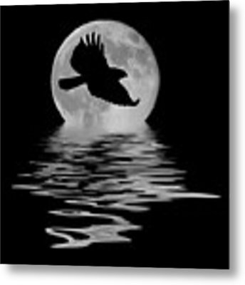 Flying Hawk 1 Metal Print by Shane Bechler