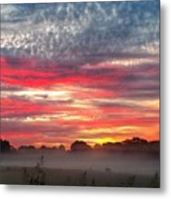 Foggy Carpet Over South Carolina Cattle Farm Metal Print by Alex Grichenko
