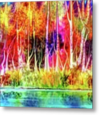 Forest Stream Metal Print by Darren Cannell