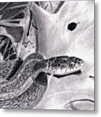 Garter Snake Metal Print by Wade Clark
