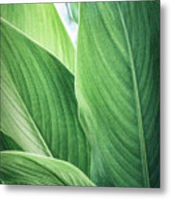Green Leaves No. 2 Metal Print by Todd Blanchard