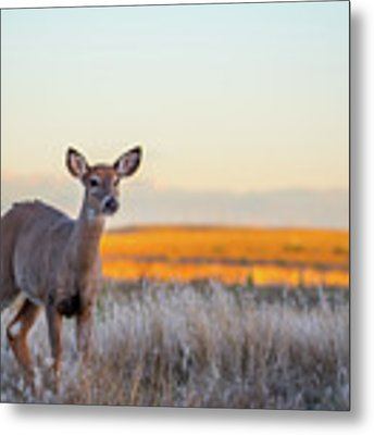 Home On The Range Metal Print by Philip Rodgers