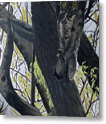 In The Shadow-ojibway Great Horn Owl Metal Print by Wade Clark