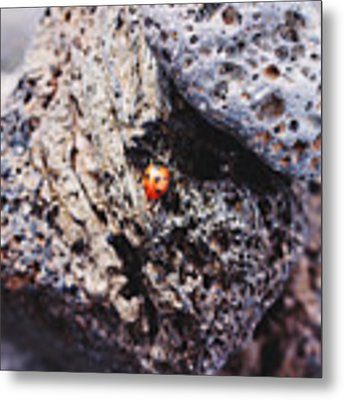 Ladybird 	 Metal Print by Martina Uras
