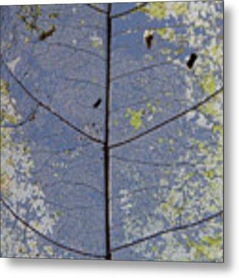 Leaf Structure Metal Print by Debbie Cundy