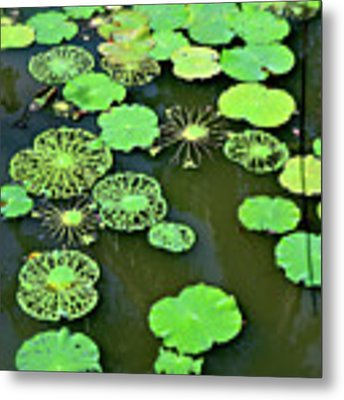 Leaves Imagery Metal Print by Yen