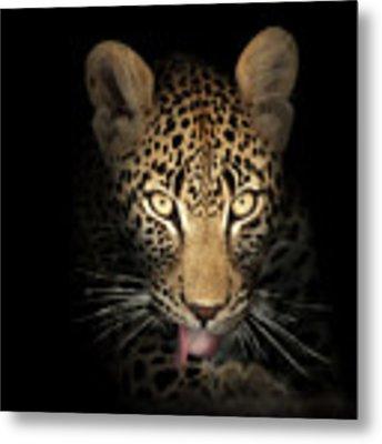 Leopard In The Dark Metal Print by Johan Swanepoel