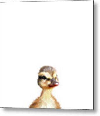 Little Duck Metal Print by Amy Hamilton