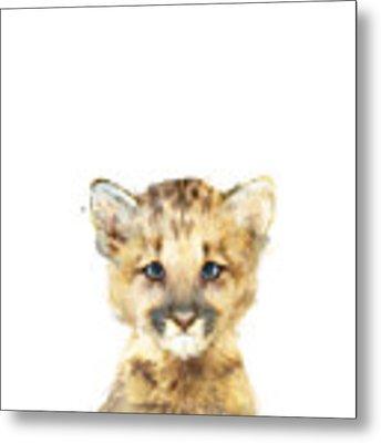 Little Mountain Lion Metal Print by Amy Hamilton