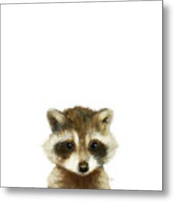 Little Raccoon Metal Print by Amy Hamilton