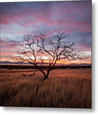 Little Tree Sunset Metal Print by Wesley Aston