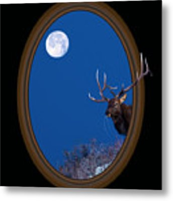 Looking Beyond Metal Print by Shane Bechler