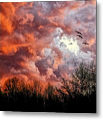 Looking For Trouble Metal Print by Lois Bryan