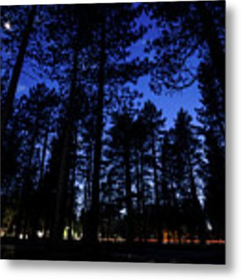 Moonrise In The Woods Metal Print by Margaret Pitcher