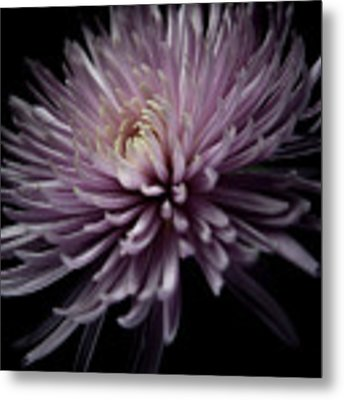 Mum, No.4 Metal Print by Eric Christopher Jackson