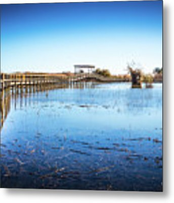 Nature Walk Metal Print by Gary Gillette
