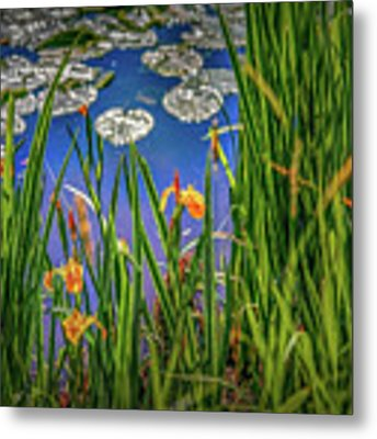 Nature's Window #h5 Metal Print by Leif Sohlman