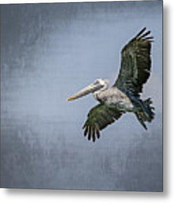 Pelican Flight Metal Print by Carolyn Marshall