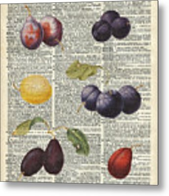 Plums Vintage Illustration Over A Old Dictionary Page Metal Print by Anna W