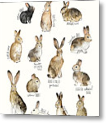 Rabbits And Hares Metal Print by Amy Hamilton