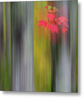 Red Leaves - Abstract Metal Print by Gary Lengyel