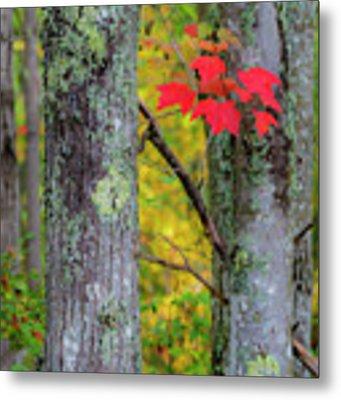 Red Leaves Metal Print by Gary Lengyel