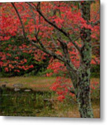 Red Tree II Metal Print by Gary Lengyel