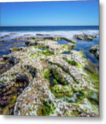 Seaweed And Salt. Metal Print by Gary Gillette