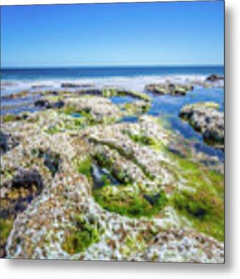 Seaweed And Salt Landscape. Metal Print by Gary Gillette