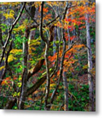 Splash Of Autumn Metal Print by Brad Brizek