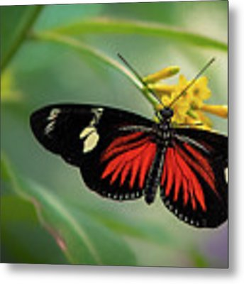 Butterfly, Stop And Smell The Flowers Metal Print by Cindy Lark Hartman