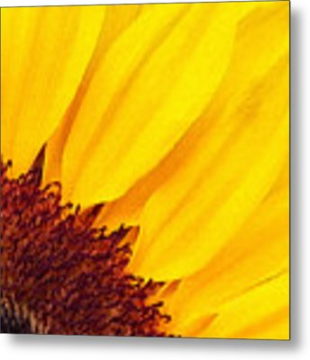 Summer Gold Metal Print by Julian Perry