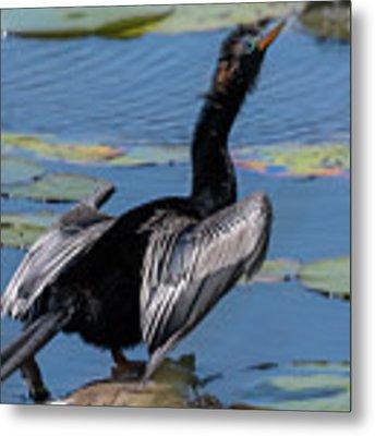 The Bird, Anhinga Metal Print by Cindy Lark Hartman