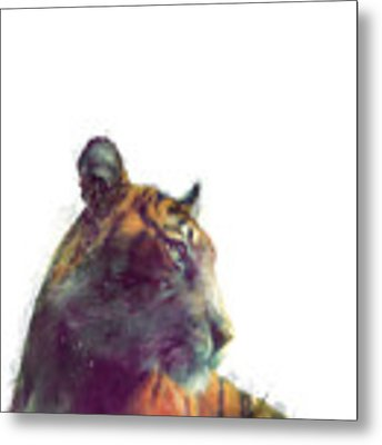 Tiger // Solace - White Background Metal Print by Amy Hamilton