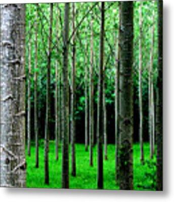 Trees In Rows Metal Print by Julian Perry