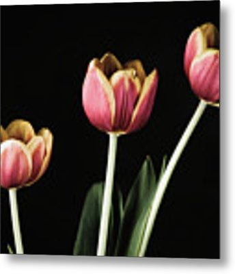 Tulip #176 Metal Print by Desmond Manny