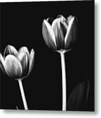 Tulip #177 Metal Print by Desmond Manny