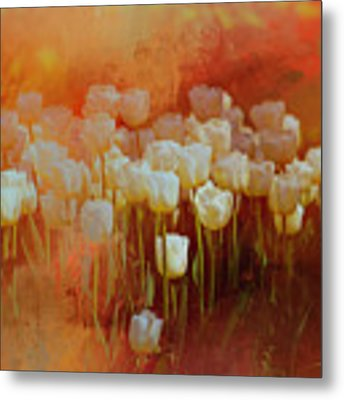 White Tulips Metal Print by Richard Ricci
