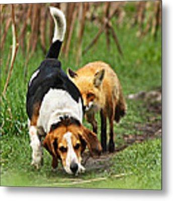 World\\\'s Worst Hunting Dog Metal Print by Mircea Costina